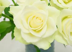 CLOSE-UP <3 Bos witte rozen