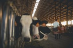 California Dairy Farm Engagement.  Reverie Photo and Films.  Wedding Photographer and Wedding Film Makers.