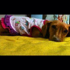 cute ! #dachshund #dog #teckel