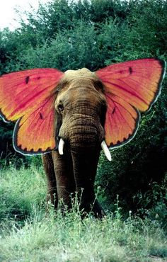 Muehlenkamp OH MY GOSH, I never thought of an elephant+bumblebee/butterfly this way! (Or whatever small flying object you said you'd combine with an elephant way back at Wilderness. Psychedelic Art, Beautiful Creatures, Animals Beautiful, Hello Beautiful, Absolutely Gorgeous, Elephas Maximus, Baby Animals, Cute Animals, Wild Animals