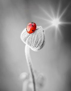 Chinese Lantern and ladybug are friends Photo Animaliere, Fotografia Macro, A Bug's Life, Wild Life, Bugs And Insects, Jolie Photo, Nature Animals, Beautiful Creatures, Lady In Red