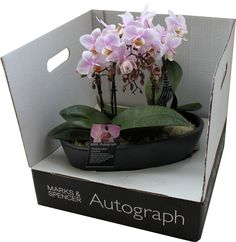 orchid packaging - Google 검색