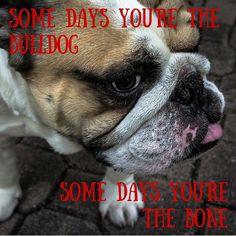 Happy Monday! #grumpy #dogs #dogsofinstagram #bulldog #monday