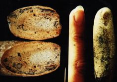 petrified finger found in cretaceous limestone. Sectioning reveals the typical porous bone structure expected in a human finger. Cat-scan and MRI identified joints and traced tendons throughout the length of the fossil.