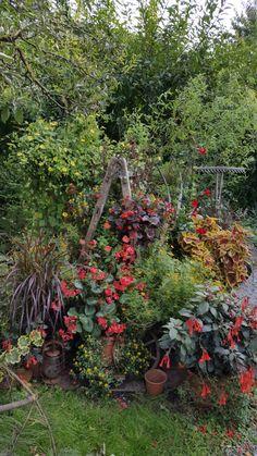 Unterm Apfelbaum wuchern die Sommerblumen. Man sieht fast keine Leiter mehr. Anfang Oktober 2016