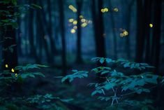 Blue Forest - Metal Artwork / 20x 30