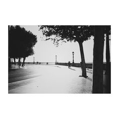 #cádiz #cai #andalucía #spain #blancoynegro #blackandwhite #sunset #atardecer #paseo #promenade #trees #arboles #igers #igerscadiz #igerspain #vsco #vscoedit #vscolovers #picoftheday #photooftheday #canon6d #35mm