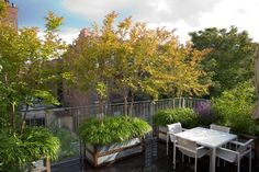 Above: Three floors above is a rooftop terrace where crape myrtle trees in containers are planted with perennial grasses. (N.B.: For a Brooklyn backyard, see Steal This Look: Modern Townhouse Garden on a Budget.