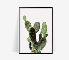 cactus botanical poster print/Cactus print/plant print/herb cacuts poster print/botanical print/cactus photohraphy print/monstera pineapple by BeautyOfPrints on Etsy