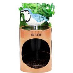 Szúrja a madárkát virágföldbe, a készülék diszkrét csicsergéssel jelzi, ha Blue Jay, Butler, Coconut Water, Drinks, Potted Plants, Water, Drinking, Beverages, Drink