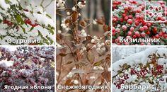 10 проверенных способов украсить сад зимой