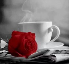 Coffee cup and red rose black and white photo Coffee Images, Coffee Photos, Good Morning Coffee, Coffee Break, I Love Coffee, My Coffee, Coffee Cafe, Coffee Shop, Simple Pleasures