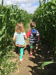 Young explorers adventure around the Maize Maze at Farmer Palmer's Farm Park | Dorset UK. Great ideas for kids days out, learning opportunities outside the classroom.