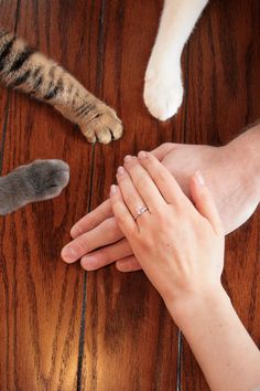 Our cats helped us announce our engagement via aww on December 26 2018 at Cat Wedding, Wedding Stuff, Wedding Ideas, Men With Cats, Wedding Entourage, Dear Future Husband, Future Wife, Couple Picture Poses, Save The Date Photos