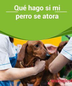 130 Ideas De Animales Perros Animales Mascotas