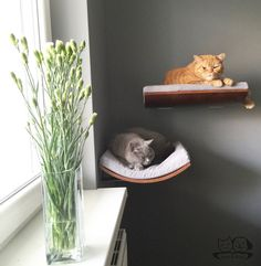 Curved perch cat bed cat shelves cat furniture by cosyanddozy