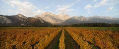 Wine Tours Switzerland Looks like #Napa, right? www.wine-tours.ch