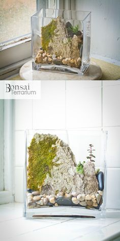 muro de musgo terrario