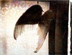 Kansanen-Stavale Laura: Forgotten Wings (Verho)