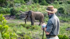 Gondwana Game Reserve | Slackpacking Trail | Mossel Bay - Dirty Boots Mountain Bike Trails, Hiking Trails, South African Holidays, Wetland Park, Abseiling, Walking Holiday, Trail Guide, Adventure Holiday, Bungee Jumping