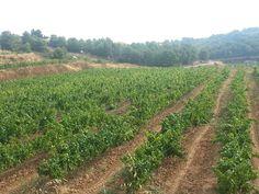 Herms Wine Vineyard, Wine, Outdoor, Wine Making, Ghosts, Outdoors, Vine Yard, Vineyard Vines, Outdoor Games