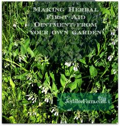 How to make a basic herbal ointment for your first aid kit   Healing ointments are fun to make.  They make quick and easy gifts.  Plus they are better than store bought remedies.  They can be made in big batches or on an as needed basis. Herbal ointments can be more effective than over the …