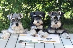 Makkosen pojat lukevat omaa kolumniaan Kääpiösnautseri-lehdestä.