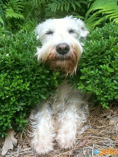 Bushes aren't just beautiful – they make great brushes! 17 Dogs LOVING Spring: http://www.peoplepets.com/people/pets/gallery/0,,20589086,00.html#21149486