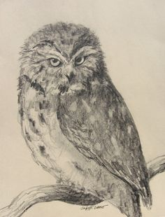Sawwhet Owl Pencil Drawing by artBYepona on Etsy, $15.00
