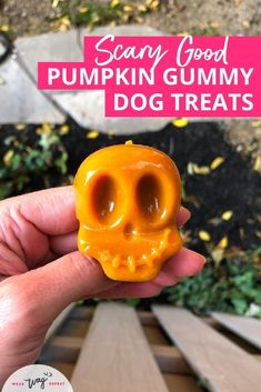 Pumpkin Gummy Dog Treat Recipe. Gummy dog treats are so healthy because gelatin is good for your dog's joints. With bigger dogs like labradors, it's important to look out for their joint health. I use a high-quality gelatin powder that contains bovine gelatin. Pumpkin is also a healthy ingredient for your dog's digestion. Try this easy homemade DIY dog treat recipe. It's no-bake, healthy and delicious! Your dog will gobble up these treats this fall! Full recipe and ideas on Wear Wag Repeat.