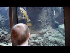 Watch the fish being fed at Turtle Bay Museum aquarium every day at 1030 am. | ReallyRedding