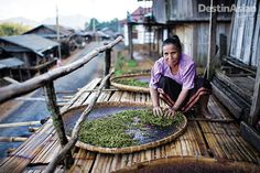 Well off the radar in the far north of Laos, hill tribes have been cultivating tea for centuries, making Phongsaly a must-go destination for any lover of the leaf.
