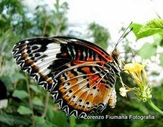 Farfalle, un battito d'ali di mille colori... www.flickr.com/photos/122320448@N03