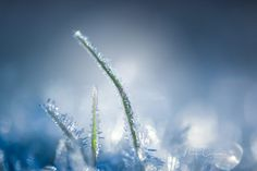 Frost by Nina Carlsen on Frost, Pictures, Photos, Grimm