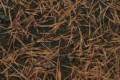 The Uses of Pine Needle Mulch thumbnail
