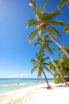 Saona Island, Dominican Republic,  Went to the island on a Catamaran, Heaven!