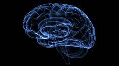 O cérebro humano é algo fascinante:nessa massa cinzenta que controla tudo…