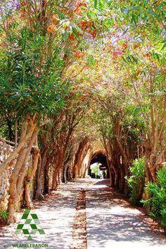 Enjoy the walk in #Byblos تمشاية حلوة ب #جبيل By Nicolas Karim #WeAreLebanon #Lebanon