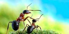 Resultat d'imatges de formigas fotos
