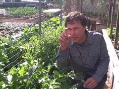 John from http://www.growingyourgreens.com/ takes you on a tour of his suburban front yard garden where he is growing many vegetables over the winter time.  In this video, you will learn about some of the vegetables that can be grown in the winter time.  After watching this video you will also learn about one of Johns new upcoming vegetables tha...
