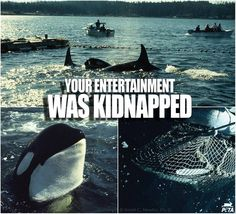 All those beautiful animals you pay to see in aquariums were kidnapped from their habitats. #Blackfish