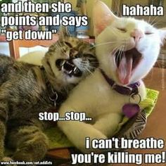 OMG, I laughed so freaking hard when I saw this!! Man, if we could read cat's minds sometimes! And that's just like my lil gal in front. Every time I reprimand her she meows back at me...like a mouthy kid. Hilarious!