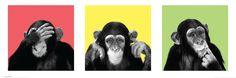 See No Evil, Hear No Evil, Speak No Evil #wildside #chimpanzee #monkey