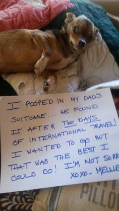 Don't leave your dog behind when you travel, or else! Read more at http://www.dogheirs.com/george/posts/6760-14-hilarious-dog-shaming-photos#mIy3ucj6fW34WOrg.99