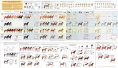 Guide to Horse Colors and Patterns by `majnouna on deviantART