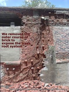 Removing a Tree and Tree Roots from a Brick Building in StLouis MO.