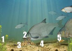 The solid PVA bag rig — Angling Times Carp Fishing Tips, Pike Fishing, Fishing Rigs, Fishing Videos, Best Fishing, Trout Fishing, Fishing Knots, Fly Fishing, Angler Fish