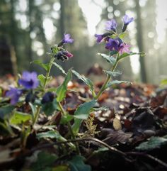 Frühlingserwachen im Taubental #taubental #wald #bokeh #frühling  #Matthiaswassermann #mawpix @dxoone