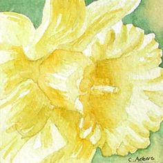Floral Watercolor - Spring Flower Yellow Daffodil by 6catsart, via Flickr