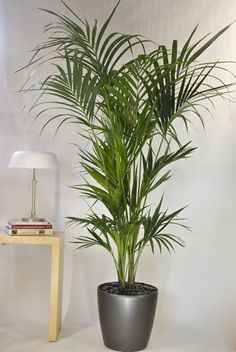 Tall Flowering House Plants 10 houseplants that actually clean the air you breathe | vignettes